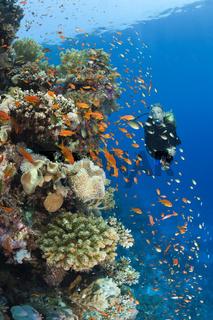 Tauchen im Roten Meer, Aegypten
