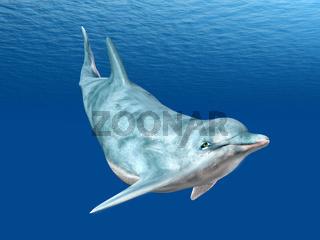 Tauchender Delfin