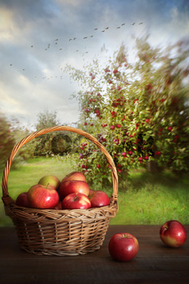 Basket of apples on table in orchard