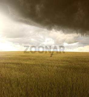 neutral field landscape