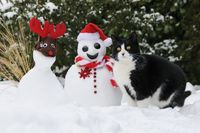 Cat, European Shorthair, beside a Santa snowman