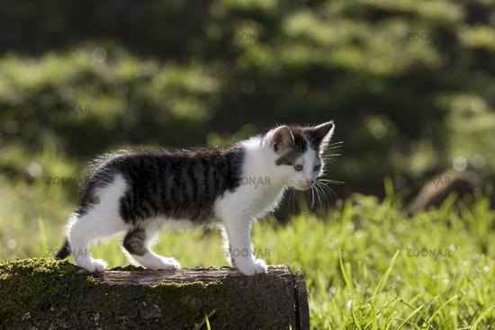 kitten on branch in the back-light