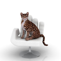 Ozelot auf Sessel