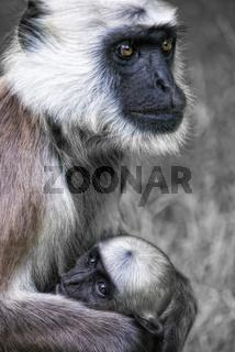 Affenmutter