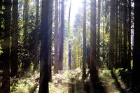 Wood Sun