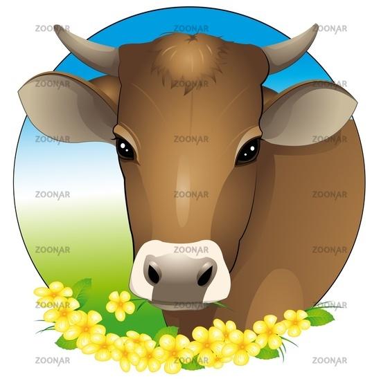 cow-portrait