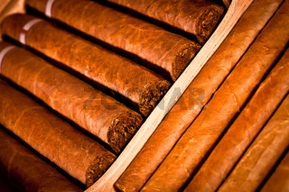 Cigars in humidor
