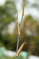 Detail of bamboo foliage and leafs