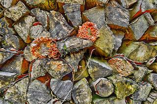 Holzstoß mit Baumschwämmen