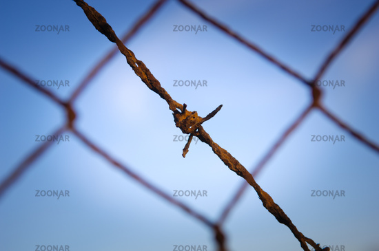 Barbed Wire Close