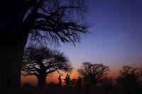 Tourists on a walking safari at sunset.