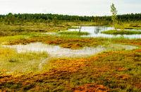 tundra sooma nationalpark estonia