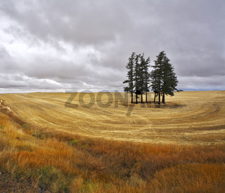 The trees in fields
