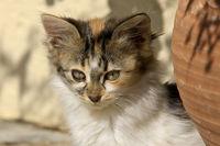 Portrait of a little kitten
