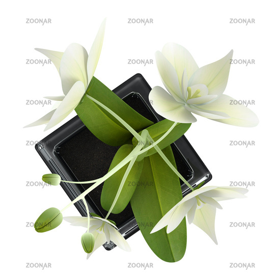 top view of orchid flower in pot isolated on white