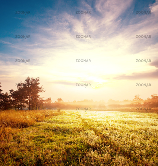 Meadow on sunrise