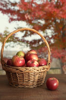Basket of freshly picked apples on table