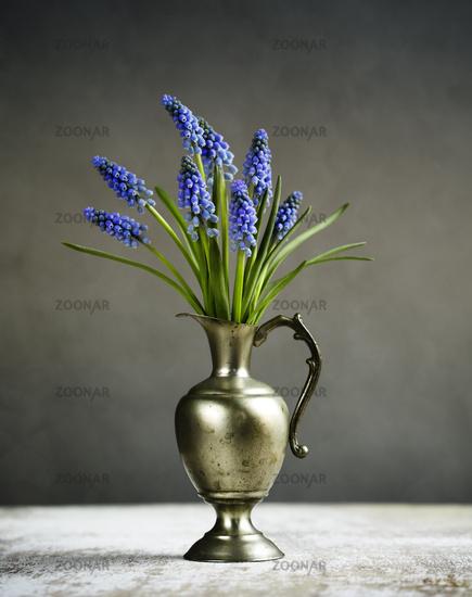 Grape Hyacinth Still-Life