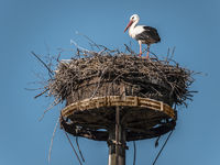 Storch-Horst
