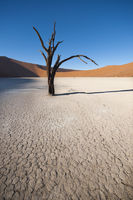 a tree in sossusvlei
