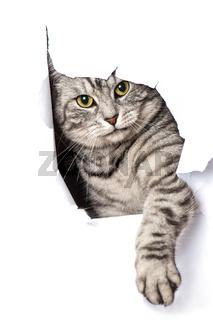 Katze schaut durch ein Loch in der Wand