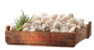 Crate of fresh white mushroom