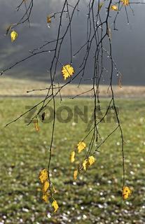 Herbstzweige