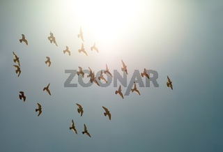 Birds flying against direct sunlight