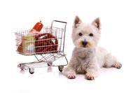 Dog with shopping cart lying