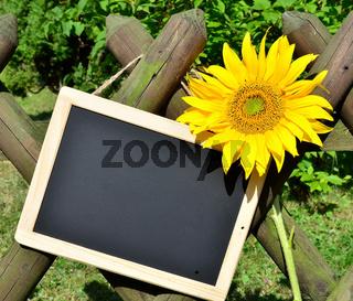 Sonnenblumen Gartenzaun Garten