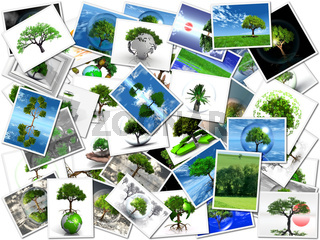 the pictures of my trees