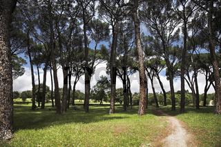 Walk in magnificent park