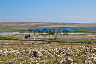 Ornithological reserve on Pag island with watching tower