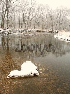 Dead Deer in Winter Cold