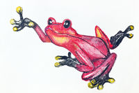Red poison dart frog from Southern America-  handmade watercolor  painting illustration on a white paper art background