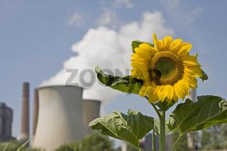 Kraftwerk Eschweiler mit Sonnenblume