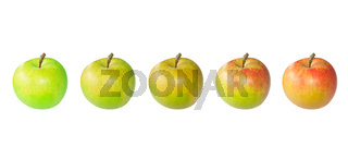 Evolution-of-apple-from-green-to-red-color-in-five-images-isolated-on-white