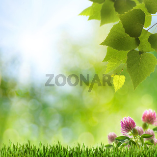 Abstract natural backgrounds with clover flowers and beauty bokeh