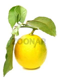 Lemon on branch.