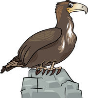 cartoon eagle wild bird