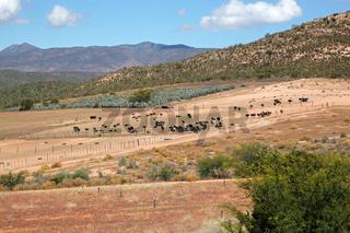 Ostrich farm landscape