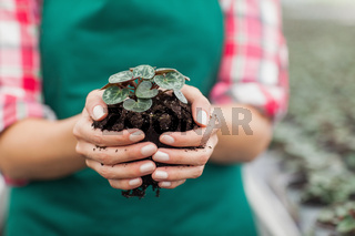 Garden center employee holding plant
