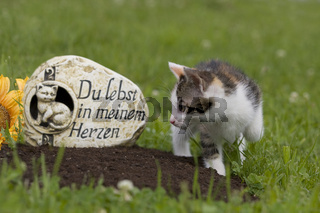 Tierfriedhof, Katze an Grab, animal cemetery, cat on grave