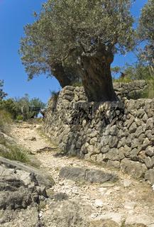 'El Camino de Muro Seco' between Deia and Port de Soller
