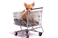 Chihuahua Welpe im Einkaufswagen