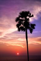 Sunset with palm. Ko Pukhet island