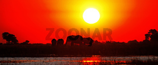 Elefanten im Sonnenuntergang am Chobe, Botswana; Elephants in the sunset at Chobe river, Botsuana