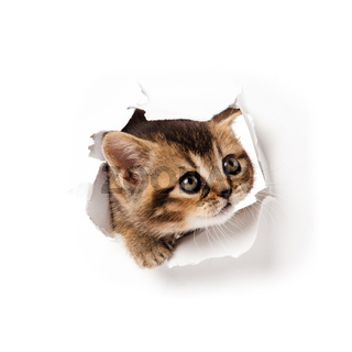 kitten looking up in paper.