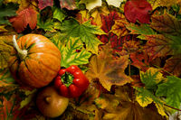 colorful leaves and vegetables during the autumn h