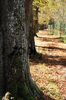 Park, trees, fall, leaves